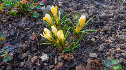 Picture of first flowers in spring.