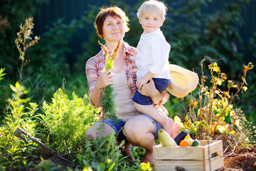 Woman and her adorable little grandson enjoying harvest