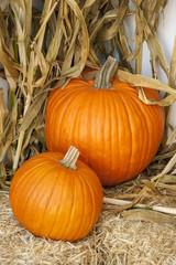 Bright orange ripe pumpkins on a harvest background of corn stalks and straw