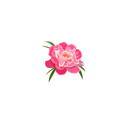 illustration of peony flower