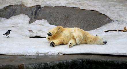 Photo of funny sleeping bear