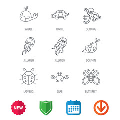 Octopus, turtle and dolphin icons. Jellyfish, whale and ladybug linear signs. Crab, butterfly flat line icons. New tag, shield and calendar web icons. Download arrow. Vector