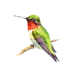 Watercolor Bird Hummingbird On the Branch Hand Drawn Summer Garden Illustration isolated on white background