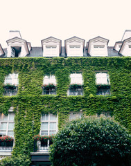 Ivy covered building in Paris, France