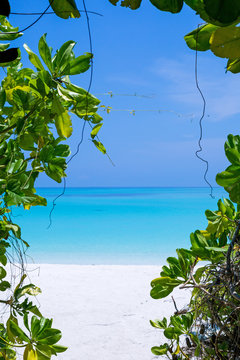 Nature of Maldives island
