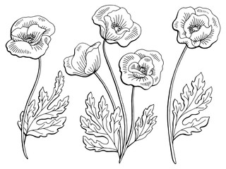Poppy flower graphic black white isolated sketch illustration vector