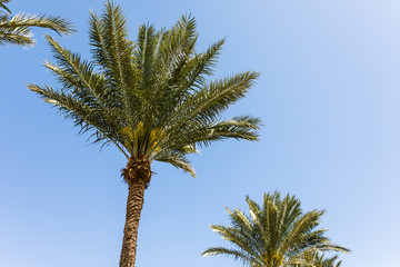 Vintage toned palm tree over sky background. Summer time