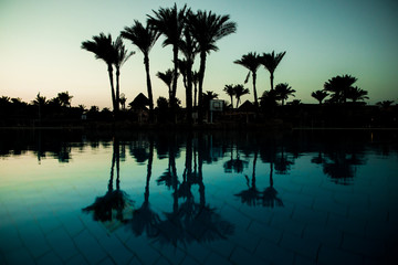 Pool with palm trees near the ocean during a beautiful sunset. Summer vocation