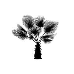 Vector sketch palm tree. Hand drawn silhouette palm tree