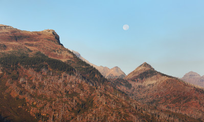 Wall Mural - Moon Rise over Scorched Forest in Glacier National Park