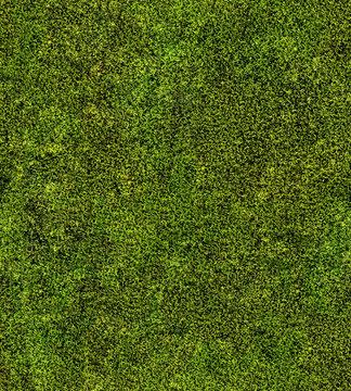 closeup of green moss seamless background