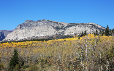 Wall Mural - Mountainside and Fall Colors Glacier National Park