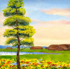 Poplar in the field