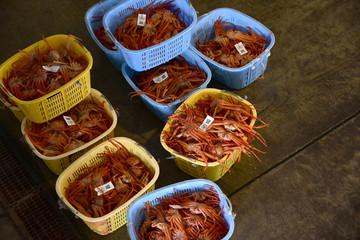 ズワイガニ漁港の出荷