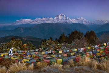 Dhaulagiri before sunrise from the top of Poon Hill