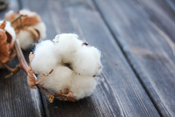 Flowers of cotton on wooden table