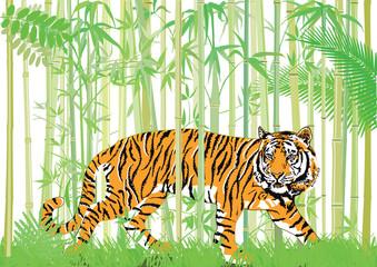 Tiger im bambus jungle