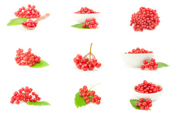 Collage of red guelder rose berries isolated on a white background cutout