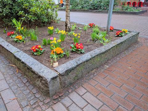 Urban Gardening / Beet mit Primeln