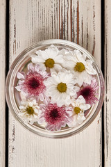 Wall Mural - Beautiful white and pink chrysanthemums in a glass bowl.