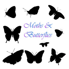Moth-Butterfly Silhouettes