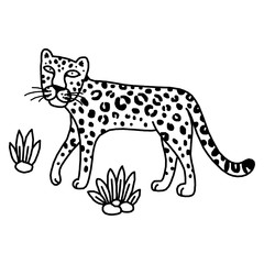 illustration of leopard, graphic vector animal