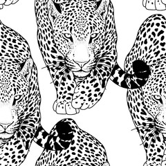 illustration of leopard, graphic  animal