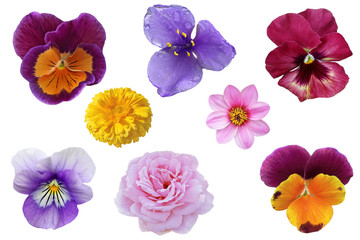 Pansy Flower Set