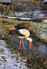 Stork standing next to the river