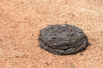 Fresh buffalo dung
