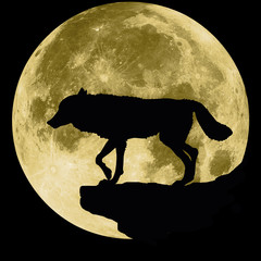 wolf on a background of the moon. Black and white silhouette illustration of a predatory animal