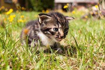 Cute kitten on grass