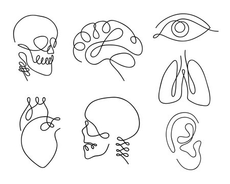 One line human organs set design silhouette.Logo design. Hand drawn minimalism style vector illustration.