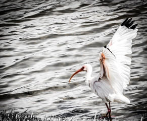 Bird Taking Flight near lake