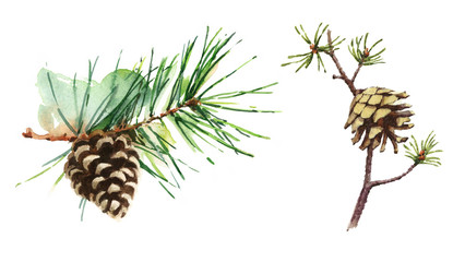 Watercolor Pine and Fir Cones On Branch Hand Painted Forest Illustration Set isolated on white background