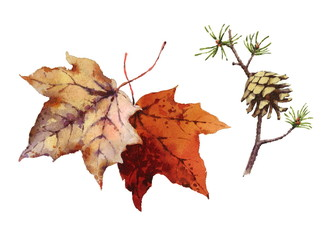Watercolor Maple Leaves and Fir Cone On Branch Hand Painted Fall Illustration Set isolated on white background