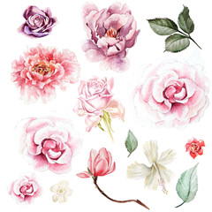 Watercolor set with peony, roses and magnolia  flowers. Illustration