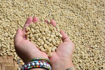 drying coffee beans (parchment coffee) in hand