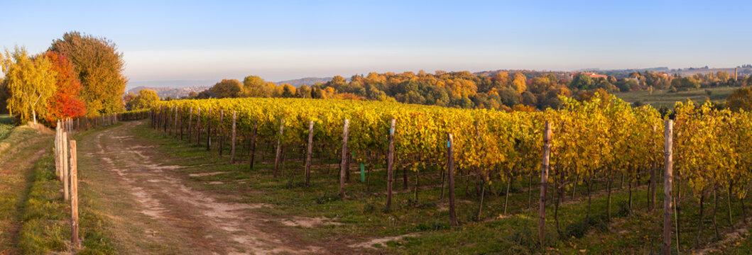 Landschaft mit Weinbau im Herbst