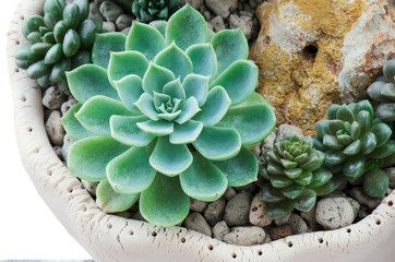 Detai lof Various Succulent plants pot garden