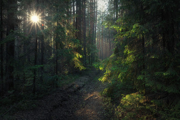 moody forest