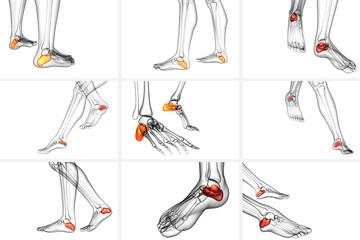 3d rendering medical illustration of the calcaneus bone