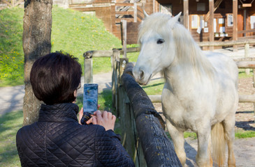 Woman Photographing a White Horse Behind a Wooden Fence