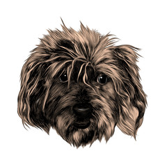 head shaggy dog funny, sketch vector graphics color picture