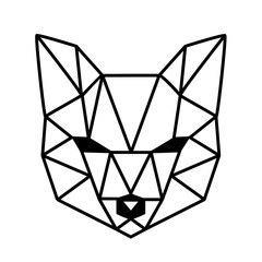 head of fox