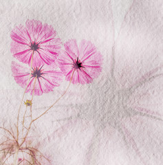 Wall Mural - Translucent cosmos flower on mulberry paper texture background