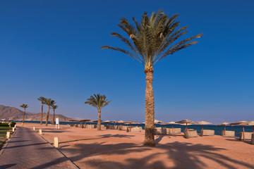 Wakacje w Egipcie. Palmy na plaży na wybrzeżu morza czerwonego.