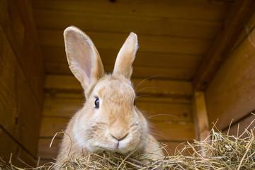 rabbit in a hutch