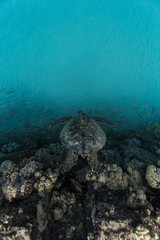 Turtle in cove