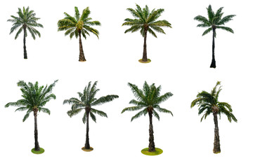 Set of palm tree isolated on white background